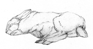Kaninchen-Skizze