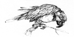 Papagei-Skizze